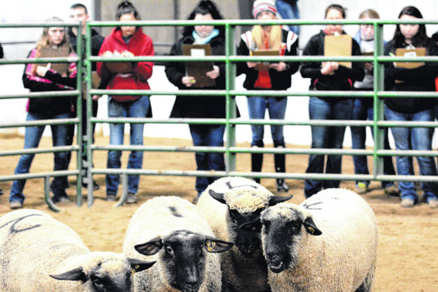 High school students judge sheep in last year's Aggies' Livestock Judging Contest, which drew 1,300 students from Ohio and surrounding states.