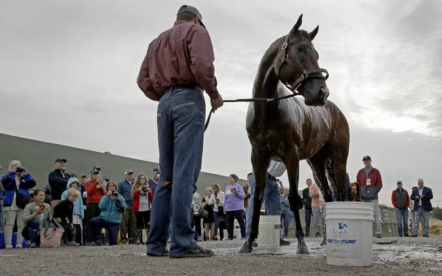 Kentucky Derby hopeful Omaha Beach gets a bath after a workout at Churchill Downs Tuesday, April 30, 2019, in Louisville, Ky. The 145th running of the Kentucky Derby is scheduled for Saturday, May 4. (AP Photo/Charlie Riedel)