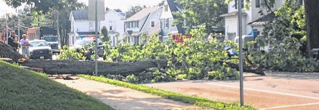 The morning commute was a bit difficult for those traveling on East Locust Street Friday as Wilmington police had to divert traffic as workers cleaned up a fallen tree.