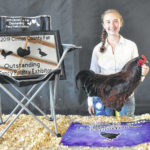Fancy Poultry champions