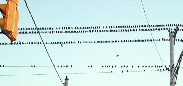 This photo, taken Wednesday evening, captures only a small portion of the birds that were perched on utility lines along an eastern stretch of Rombach Avenue in Wilmington. The same type of thing was observed Tuesday evening in the same location. Sometimes a part of the flock would take flight, and appear like a darting dark cloud against the sky. Just as these birds enjoy the sun's rays during this unseasonably warm January — with Saturday's temps expected to approach 70 — please share your un-January-like photos of outdoor activities with us on the News Journal's Facebook page.