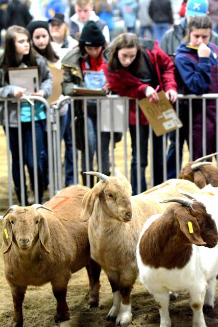 High school students judge equine, dairy and general livestock to hone their skills for summer fairs and other competitions.