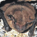 Ohio's beautiful bats: Don't fear them — they're our friends