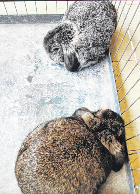 Police are seeking information on these rabbits.