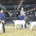 Breeding Goat Showmanship