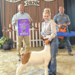 Fair's Open Goat Show