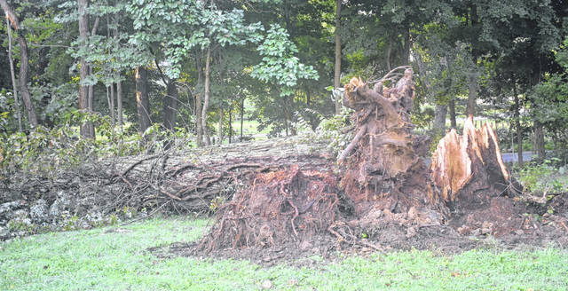 A tree at the Clinton County Youth Center fell victim to Tuesday afternoon's brief but strong storm, which also knocked out power in some areas.