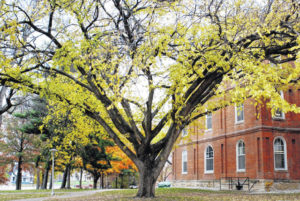 Ulmus Americana: Magnificent Logan Elm holds unique place in US — and Wilmington College — history
