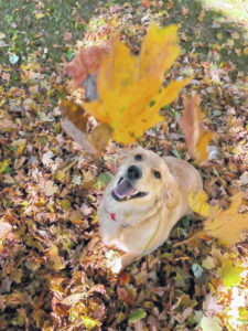 Fall in Clinton County: Splash of colors and leafy fun