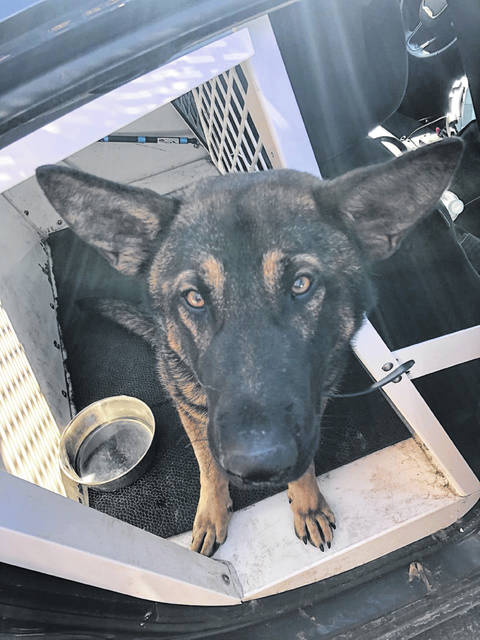 """The Wilmington Police Department's new K9, Miko, sits """"in his favorite spot"""" while on duty, stated Officer Jordan Ianson."""