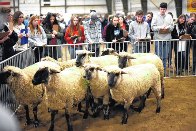 Students judge sheep during last year's Livestock Judging Contest. This year's will be online and open to high school students across the nation.