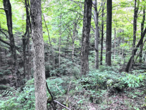 State grant funds will acquire a new nature preserve in Clinton County