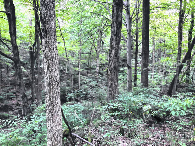 A natural area in Clinton County adjacent to Caesar Creek State Park will become a nature preserve.
