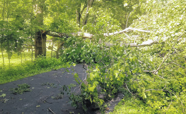 Scenes like this — on the Luther Warren Peace Path and at Sugar Grove Cemetery — were all-too-common in the aftermath of the storms.