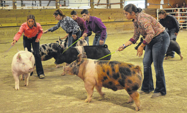 The six participants in the Clinton County Junior Fair Showman of Showmen Sweepstakes show someone else's hog in the show ring at the Livestock Expo Center on the Clinton County Fairgrounds.