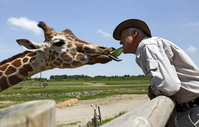 FILE - In this May 29, 2018, file photo, Jack Hanna feeds J.P. the giraffe a piece of lettuce from his own mouth at the the Columbus Zoo & Aquarium in Columbus, Ohio. The Columbus Zoo and Aquarium has lost its most important accreditation, a major blow to an institution once widely admired in its industry and by the general public. The zoo said it plans to appeal the decision announced Wednesday, Oct. 6, 2021, by the Association of Zoos and Aquariums, considered the nation's top zoo-accrediting body, one day after the institution announced its new leader. (Adam Cairns/The Columbus Dispatch via AP, File)