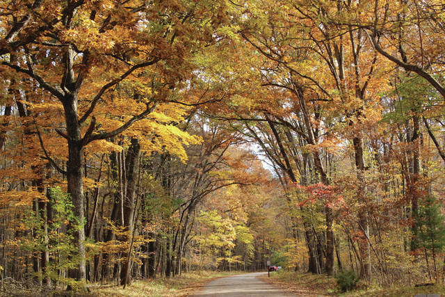 The fall foliage in much of Northwest Ohio was at or near peak color over the weekend. Above, the trees along Oak Openings Parkway near Wilkins Road in Swanton Township put on a beautiful display Saturday.