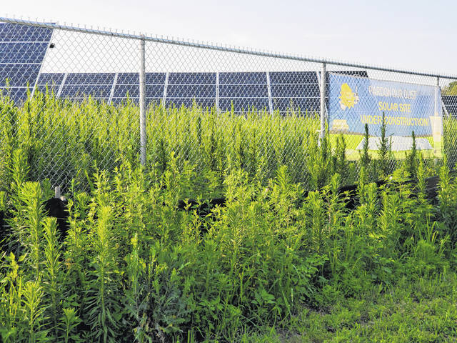 The solar field at Swanton High School is overgrown with weeds both inside the fence and around the outside.