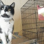 Feline friends ready for adoption