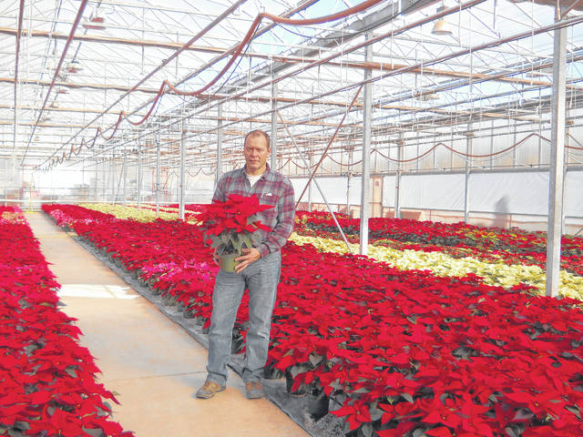 Bob's Market co-owner Scott Barnitz in the poinsettia greenhouse.