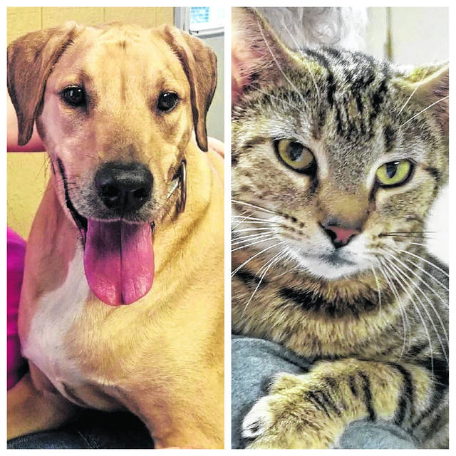 """The Mason County Animal Shelter's """"Pets of the Week"""" are pictured. Skipper the dog is described by Mason County Animal Shelter staff as a big, friendly lab mix who loves attention and catches his treats in the air. He also shakes hands, when asked. Tabby, this beautiful female cat, is described by Mason County Animal Shelter staff as very friendly and one who loves to contently lay on your shoulder, as pictured here. If interested in giving either of these pets a forever home, call the shelter at 304-675-6458."""