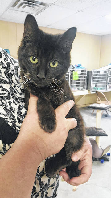 Staff at the Mason County Animal Shelter say Tide the tomcat is around seven months old. Staff say Tide is a very sweet boy who has a limp from a previous injury but it doesn't slow him down. He is all black but has unique white whiskers. If interested in adopting this kitty and giving him a forever home, call the shelter at 304-675-6458.