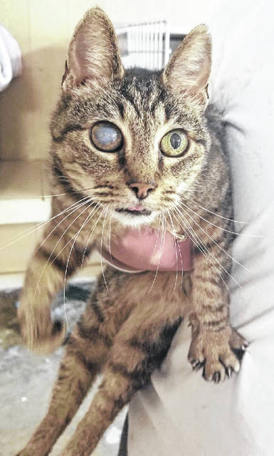 Mason County Animal Shelter Staff say, this female cat, Becky, is a very sweet girl, but blind in one eye. If interested in giving Becky some unconditional love in a forever home, contact the shelter at 304-675-6458.