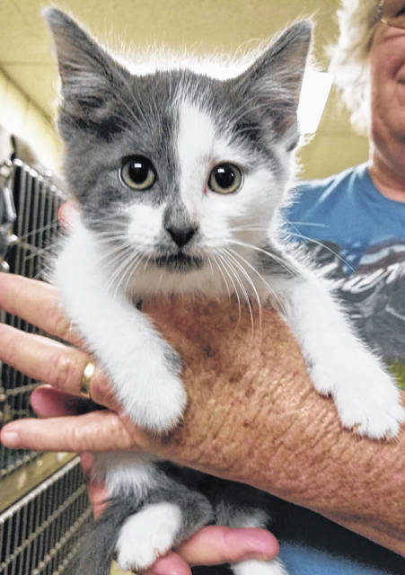 Staff at the Mason County Animal Shelter say Cher, pictured, is a kitten around 10 weeks old who is very friendly and is in need of a forever home. If interested in making Cher your best friend, contact the shelter at 304-675-6458.