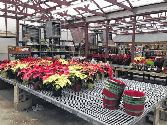At Bob's Market and Greenhouses many of the poinsettias that were out for purchase had already found their way into a buyer's home for the holidays.