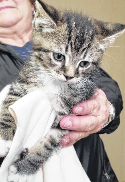 Staff at the Mason County Animal Shelter say Tinsel is a very friendly kitten. Staff say Tinsel is just eight weeks old and wants to find the perfect home Christmas. If interested in adopting this kitten and giving her a forever home, call the shelter at 304-675-6458.