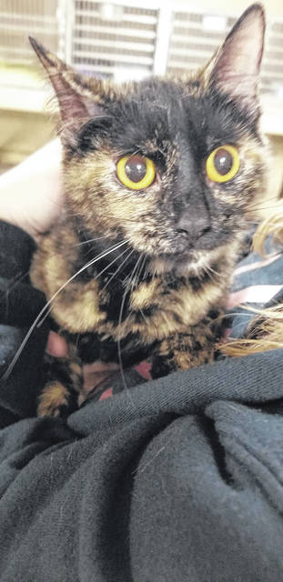 "Pictured is Sparkle, a one-year old female, tortoiseshell cat - ""torties"" as they're known, are named for their coat which is similar to a tortoiseshell material in appearance. Sparkle is a little on the shy side but enjoys being petted. She is looking for that forever home at the Mason County Animal Shelter. For information on adopting Sparkle, phone the shelter at 304-675-6458. Shelter hours are noon to 4 p.m., Monday-Friday."