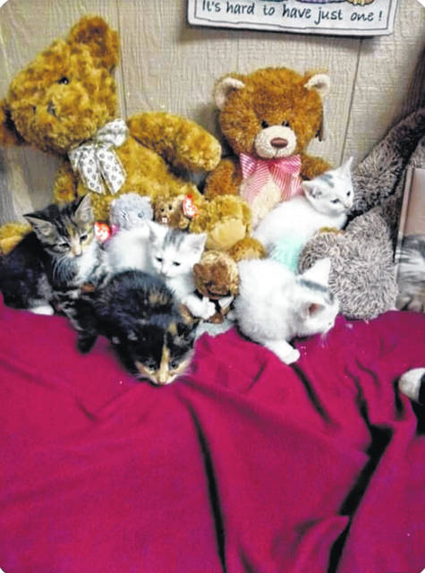 "Some sweet siblings are looking for their forever homes. These little ones pictured are around eight weeks old. ""Come and see these guys and gals and the many others we have,"" said Mason County Animal Shelter staff. For information on adopting one, or all of these cuties, phone the shelter at 304-675-6458. Shelter hours are noon to 4 p.m., Monday-Friday."