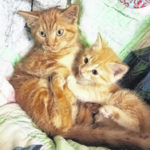 Shelter has exceeded typical intake limit on cats…adopters needed