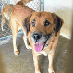 Shelter pets of the week