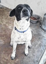 Tilly, a Pointer mix, with a twin sister named Lilly, are available for adoption, either together or separately.