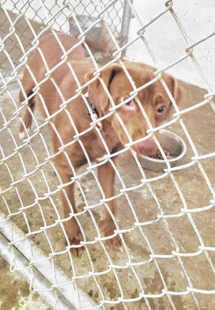 Rusty, a one-year old Labrador mix, enjoys getting out of the kennel for some exercise.