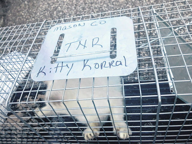 The Mason County Kitty Korral was one of many entities in Mason County which were awarded funds from the Robert & Louise Claflin Foundation. The animal welfare group focuses on the spay and neuter of cats to control the homeless feline population.