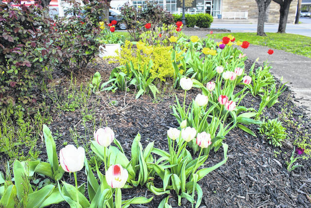 "These hearty tulips add color to Gunn Park in Point Pleasant as Easter arrives in Mason County this weekend. According to the National Garden Bureau, cultivated for at least 400 years, tulips are members of the lily family and are native to southern Eurpoe, the eastern Mediterranean, North Africa and Asia. In Mason County, tulips are a harbinger of spring and a welcome ""normal"" sight during these ""not so normal"" days. (Beth Sergent 