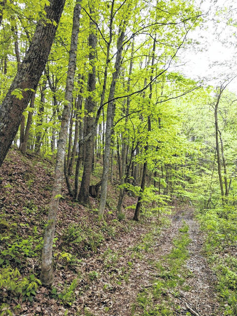 At 15 miles, the Symmes Creek and Morgan Sisters trails in Wayne National Forest, do join together in the middle and can be accessed from Symmes Creek Road and Pumpkintown Road, respectively.