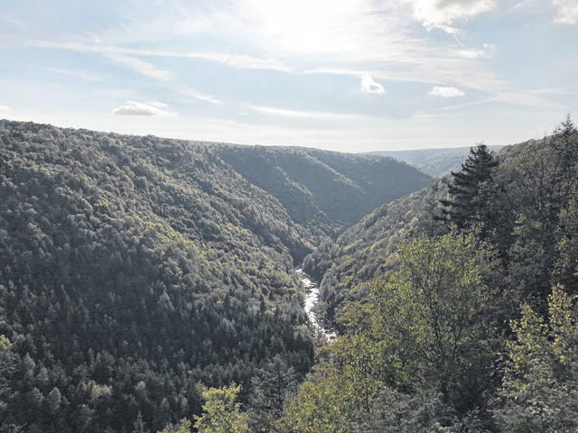 Pictured is the Blackwater Canyon at Blackwater Falls State Park. (Beth Sergent | OVP)