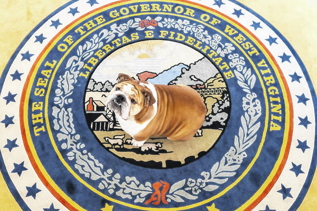 """This week, Gov. Jim Justice announced the state's vaccination incentive lottery will officially be called """"Do it for Babydog: Save a life. Change your life."""" Babydog is pictured."""