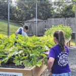A growing interest in community gardens