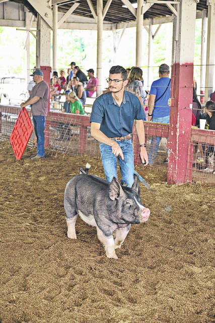 Levi Wright works the show ring with his market hog. Wright took first place in senior showmanship and grand champion market hog on Monday.