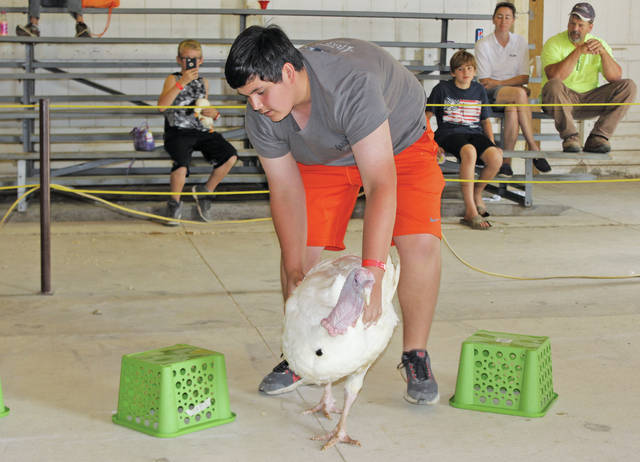 Cody Slimak of Oberlin guides his turkey around a series of green crates.