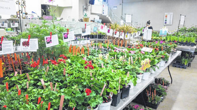 <strong>The 46th annual MayFair Plant Sale will be held Wegerzyn Gardens MetroPark is located at 1301 E. Siebenthaler Avenue in Dayton on Saturday, May 4 and Sunday, May 5.</strong>