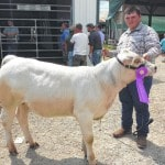 Beef show winners announced