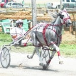 12 harness races set for Wednesday