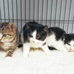 FHS Pets of the Week