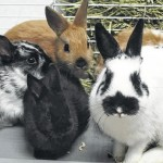 FHS Pets of the Week: Bunnies available for adoption