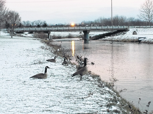 As the sun set on Monday, several Canada geese could be seen resting in and around Paint Creek near Christman Memorial Park. In 2015, the Ohio population of Canada geese was reported as roughly 130,000, with the number likely to continue increasing, according to wikipedia.org.